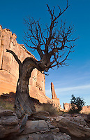 "An old dead Juniper tree along ""Broadway"" in Arches National Park, Utah, USA."