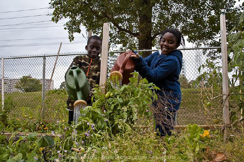 Children in an after school gardening program watering their garden plots.