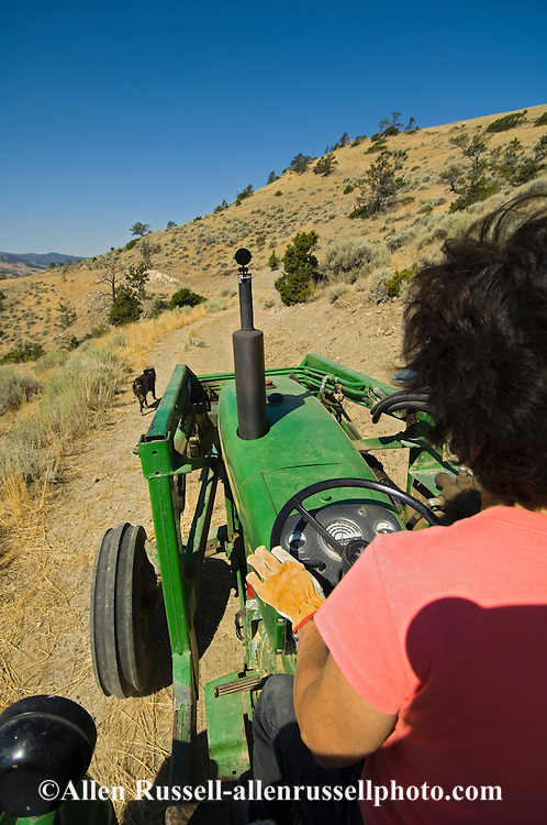Mature woman drives tractor with dog companion,<br /> MODEL RELEASED, PROPERTY RELEASED