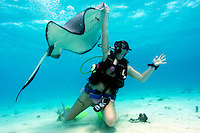 A Diver interacts with a playful Southern Stingray...Shot at Stingray City, Grand Cayman
