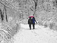 The Ramble in Central Park during a snow storm.