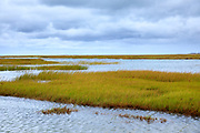 Salt marsh by Atlantic Ocean on Cape Cod, New England, USA