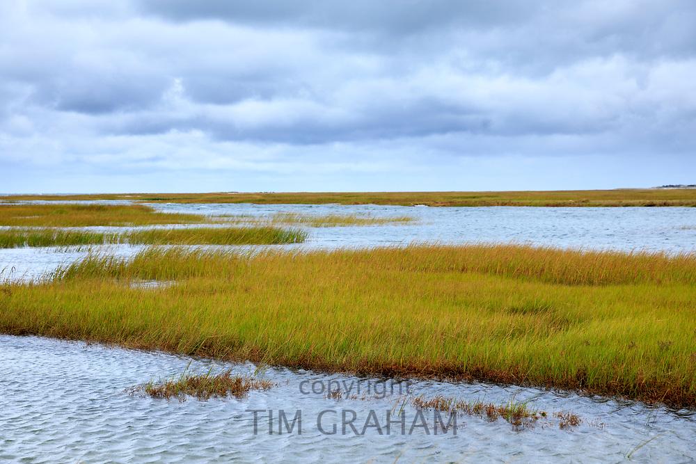 Salt marsh by Atlantic Ocean on Cape Cod, New England, USA