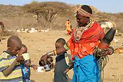 Samburu Maasai men bleed a cow to produce the Blood Milk they drink. Samburu Maasai an ethnic group of semi-nomadic people Photographed in Samburu, Kenya
