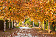 Fall, Driveway., Southampton, NY