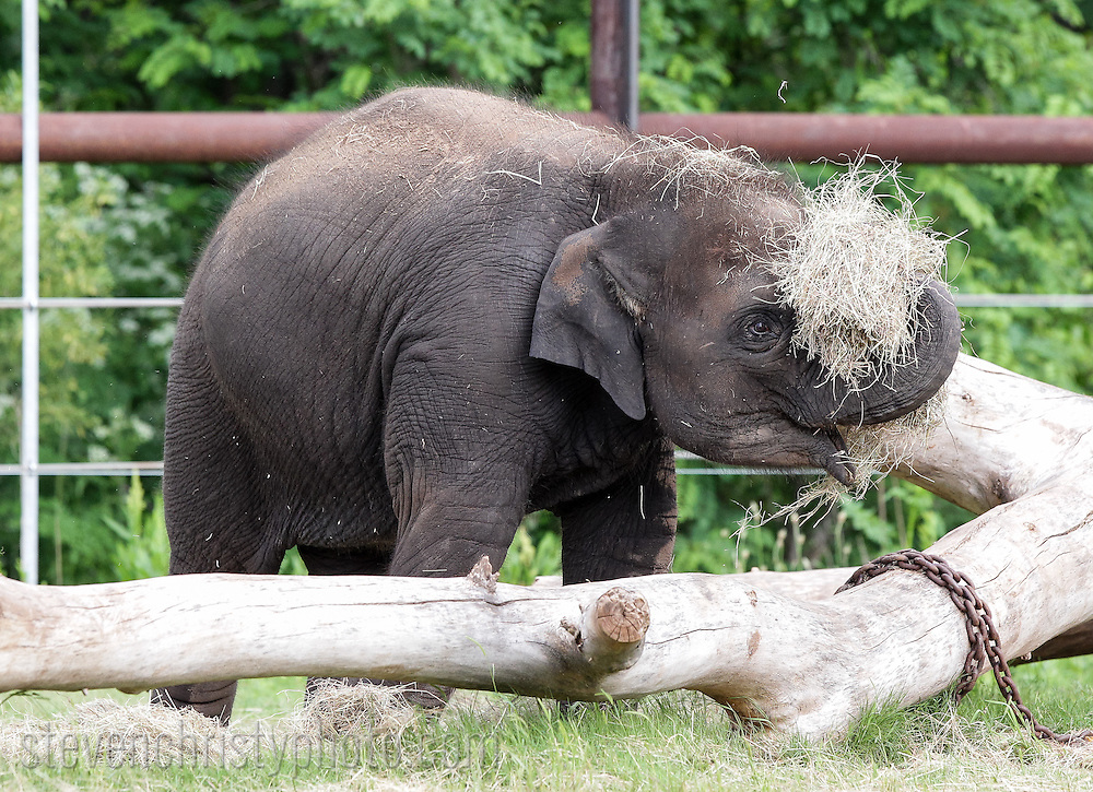 May 25, 2013: Oklahoma City Zoo