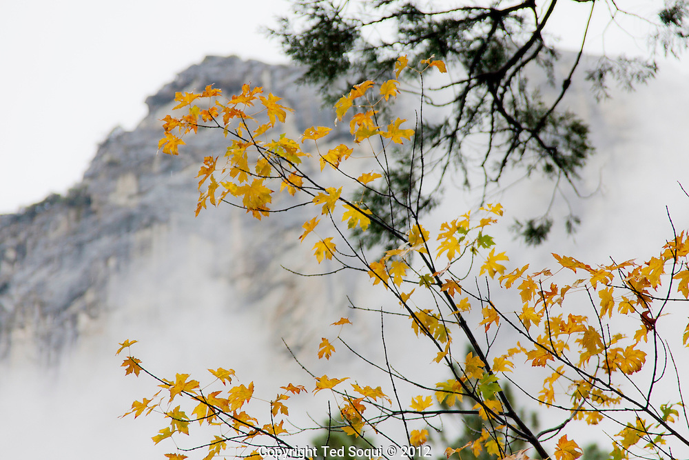The autumn season in Yosemite National Park. Leaves and grasses all around the park are changing to their fall colors, and rain and snow are beginning to fall.