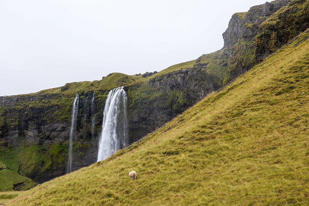 Selijalandsfoss<br /> Iceland