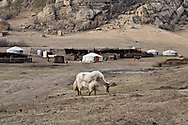 Mongolia. nomads catle breeders , Bayerma family, in a ger camp in the valley of Terelg near  Ulan Baatar ULN / eleveurs nomades , famille Bayarma, dans un campement de yourtes, vallee de Terelg  Oulan Bator - Mongolie