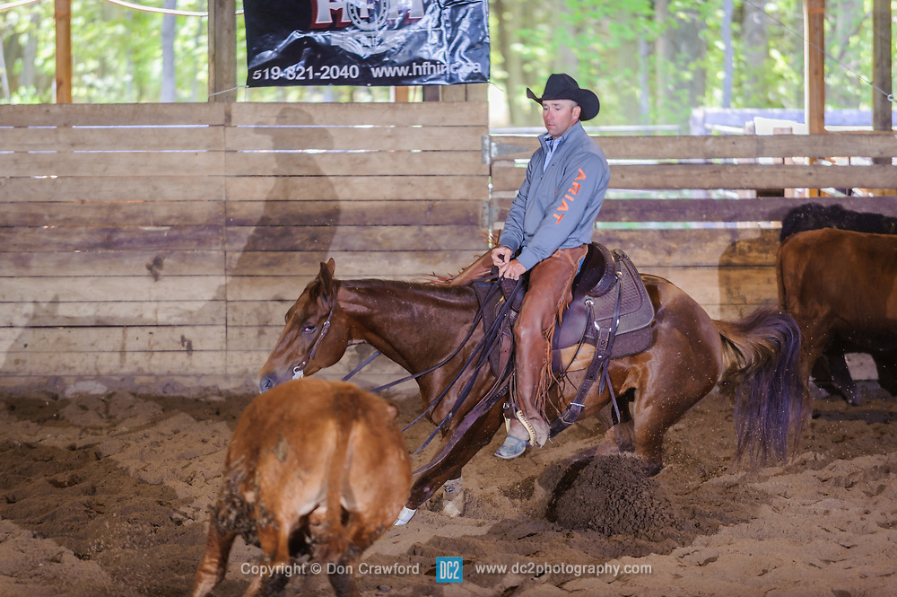 May 20, 2017 - Minshall Farm Cutting 3, held at Minshall Farms, Hillsburgh Ontario. The event was put on by the Ontario Cutting Horse Association. Riding in the Open Class is Troy Donaldson on Missancattin owned by Katie Leung.