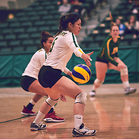 3rd year setter, Satomi Togawa (5) of the Regina Cougars during the Women's Volleyball home game on Thu Nov 15 at Centre for Kinesiology, Health & Sport. Credit: Arthur Ward/Arthur Images