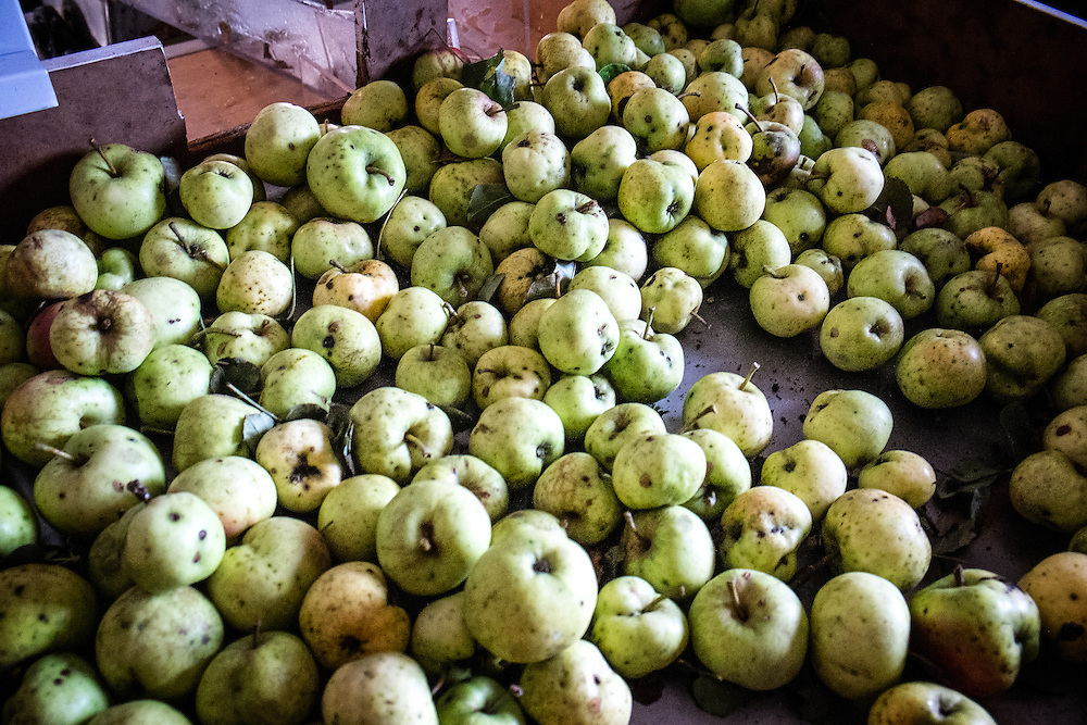 Apples get fed into the grinder and apple press through shoot situated above the press.