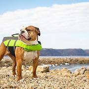 20140409 Life Jacket Bulldog