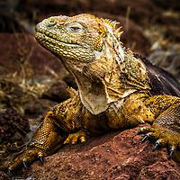 Galapagos Treasures