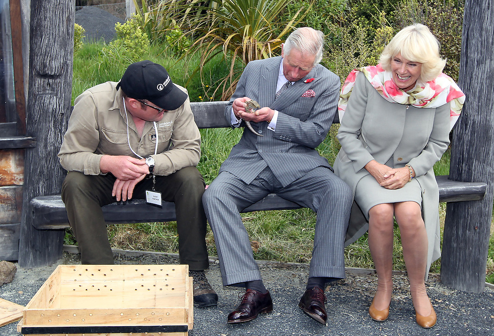 Prince Charles, Prince of Wales looks after a Tuatara while Camilla, Duchess of Cornwall laughs as a bumble bee unsettles Prince Charles on during their visit to the Orokonui Ecosanctuary, Dunedin, New Zealand, Thursday, November 05, 2015. Credit:SNPA / Getty, Rob Jefferies **POOL**