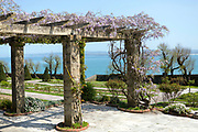 SANTANDER, SPAIN - April 19 2018 - Wisteria flowers growing on stone pergola structure in Mataleñas Park, Cantabria, Northern Spain, Europe.
