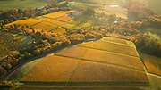 Aerial view over Cristom with brilliant golden fall colros, Eola-Amity AVA, Willamette  Valley, Oregon
