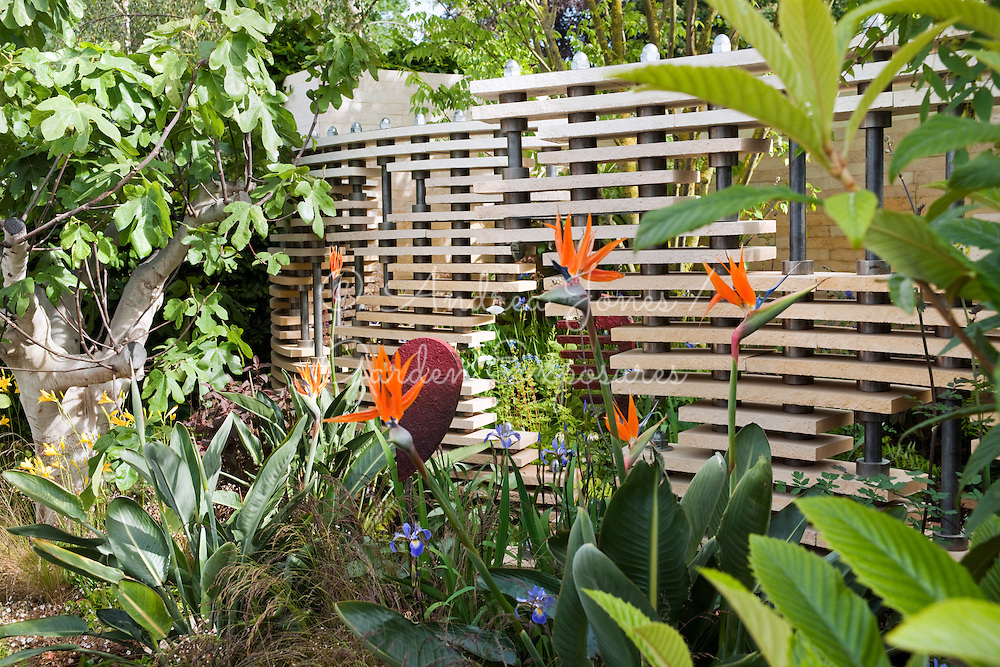 The Bradstone Fusion Garden designed by The Chris Beardshaw Scholarship Team. Louvred screen fencing and planting including Strelitzia and Ficus carica (fig)