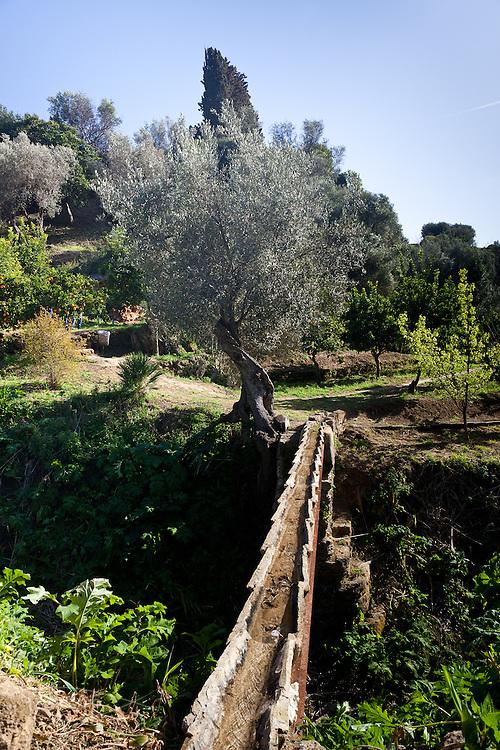 Agrigento, Valle dei Templi. Ulivo e canalizzazione araba nel Giardino della Kolymbetra. Proprietà FAI. ©2012 Vince Cammarata | FOS