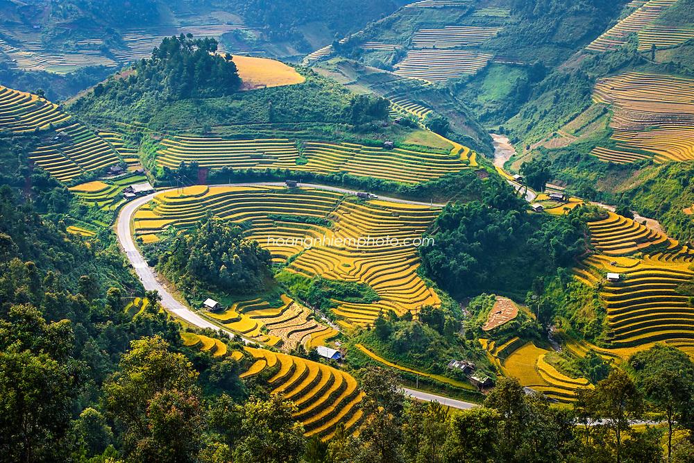 Vietnam images-landscape-MucanChai-Rice field phong cảnh việt nam