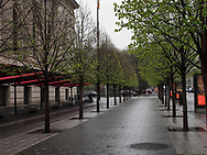 Linden trees in front of the Metropolitan Museum of Art.
