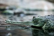 Krokodil Pavillion im Prager Zoo in Troja.