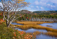 Seal Cove Pond In The Colors Of Autumn, Mount Desert Island, Acadia National Park, Maine, USA