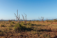 Photo overlooking a hot and dry patch of the bush in South Africa.