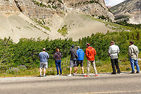 People lining the side of the road in the Many Glacier region of Glacier National Park only a few feeet away from a bear foraging in the woods.<br /> <br /> &copy;2016, Sean Phillips<br /> http://www.RiverwoodPhotography.com