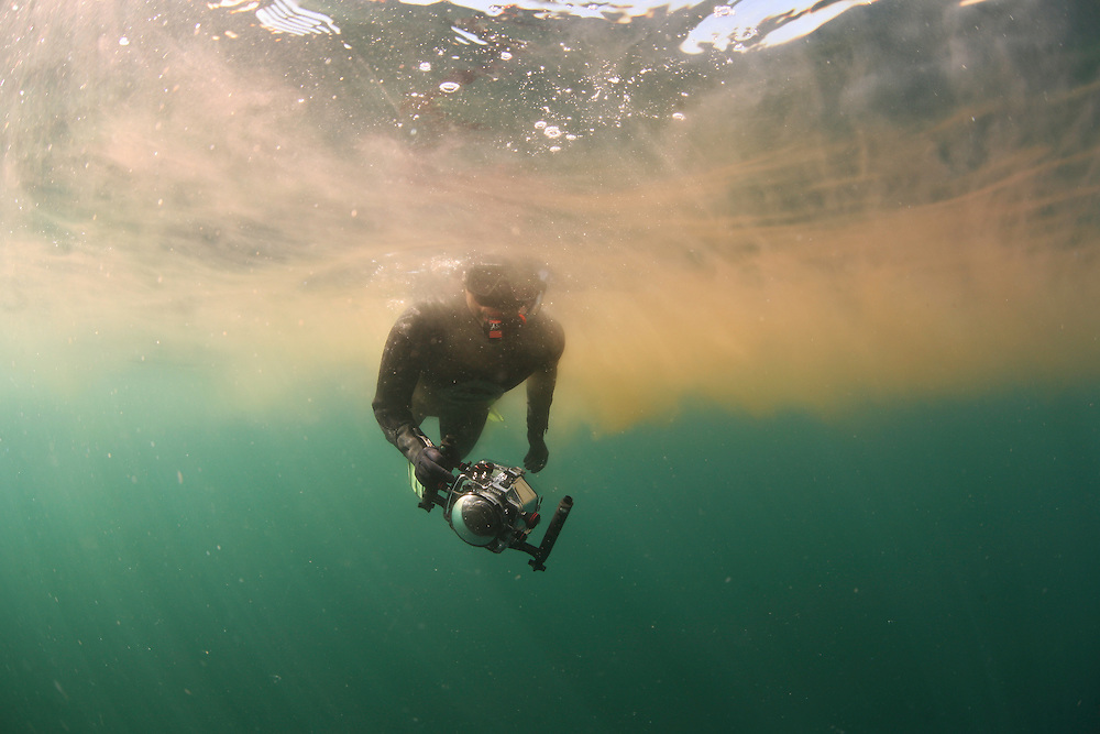 Diver in dense cloud of Plankton in Basking Shark feeding area; in the area of the Island of Mull; Scotland; June 2009<br /> Model release form n&ordm; 1<br /> Mission: Basking Sharks<br /> Location: Scotland, off the Island of Mull (Coll and Tiree Islands area) - June 2009