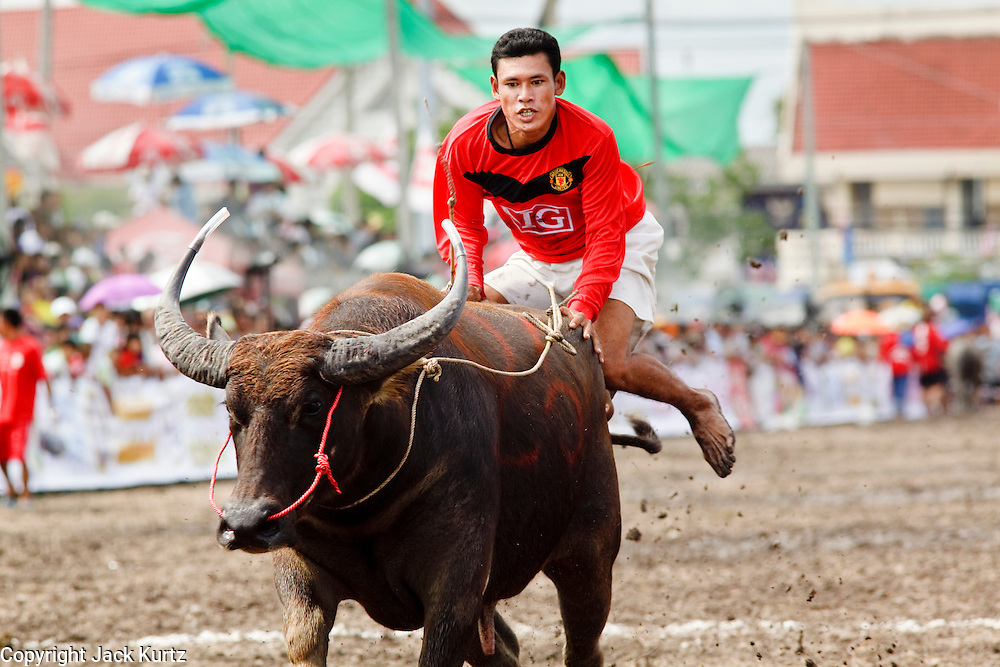 """03 OCTOBER 2009 -- CHONBURI, THAILAND: A """"jockey"""" gets off his water buffalo down the track on the first day of races at the Chonburi Buffalo Races Festival, Saturday, Oct. 3. Contestants race water buffalo about 200 meters down a muddy straight away. The buffalo races in Chonburi first took place in 1912 for Thai King Rama VI. Now the races have evolved into a festival that marks the end of Buddhist Lent and is held on the first full moon of the 11th lunar month (either October or November). Thousands of people come to Chonburi, about 90 minutes from Bangkok, for the races and carnival midway.   PHOTO BY JACK KURTZ"""