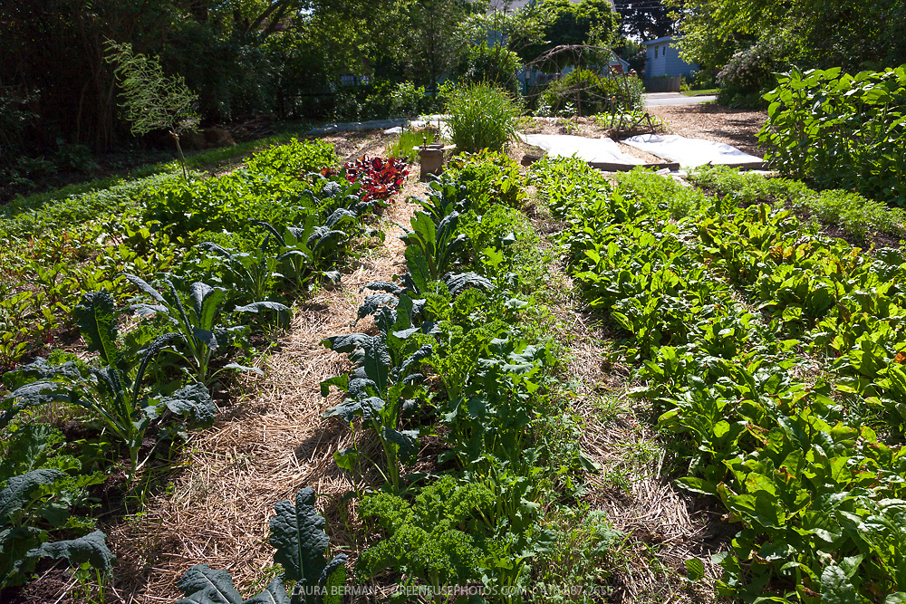 Intensively planted rows of kale, chard, and other vegetables in a kitchen garden
