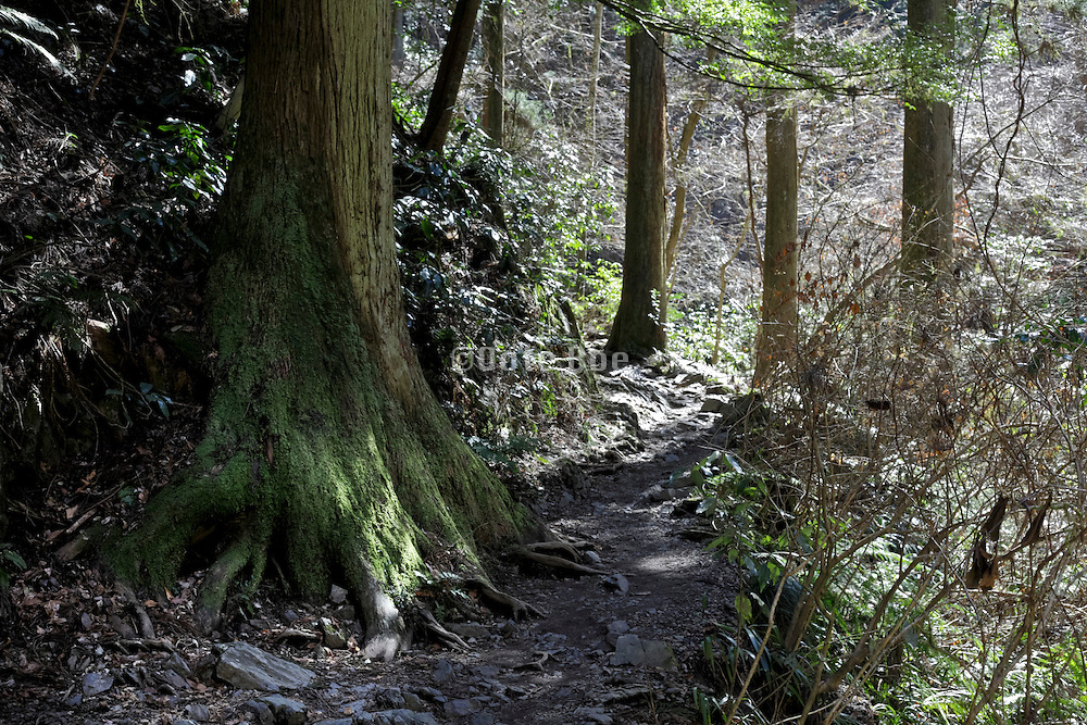 at the Meiji Memorial Forest Takao Quasi-National Park Japan Tokyo Hachioji ward