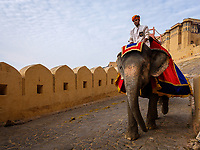 JAIPUR, INDIA - CIRCA NOVEMBER 2018: Elephant and guide in Amber Fort. Jaipur is the capital and the largest city of the Indian state of Rajasthan. Jaipur is also known as the Pink City, due to the dominant color scheme of its buildings and a popular tourist destination.