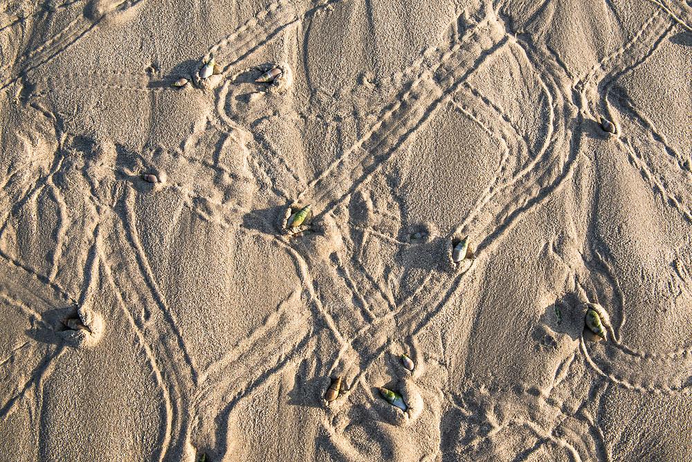 Ploghshare snails, De Mond Nature Reserve, Western Cape, South Africa
