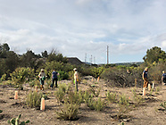 Aliso Viejo Plant A Tree Day