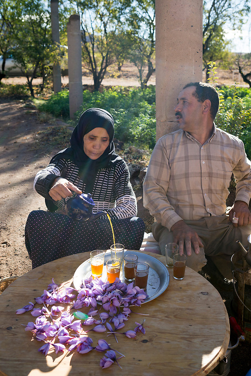 TALIOUINE, MOROCCO - October 25th 2015 - Amazigh Moroccan lady prepares saffron tea with freshly harvested stigmas at a saffron farm in Taliouine, Sirwa Mountain Range, Souss Massa Draa, Southern Morocco