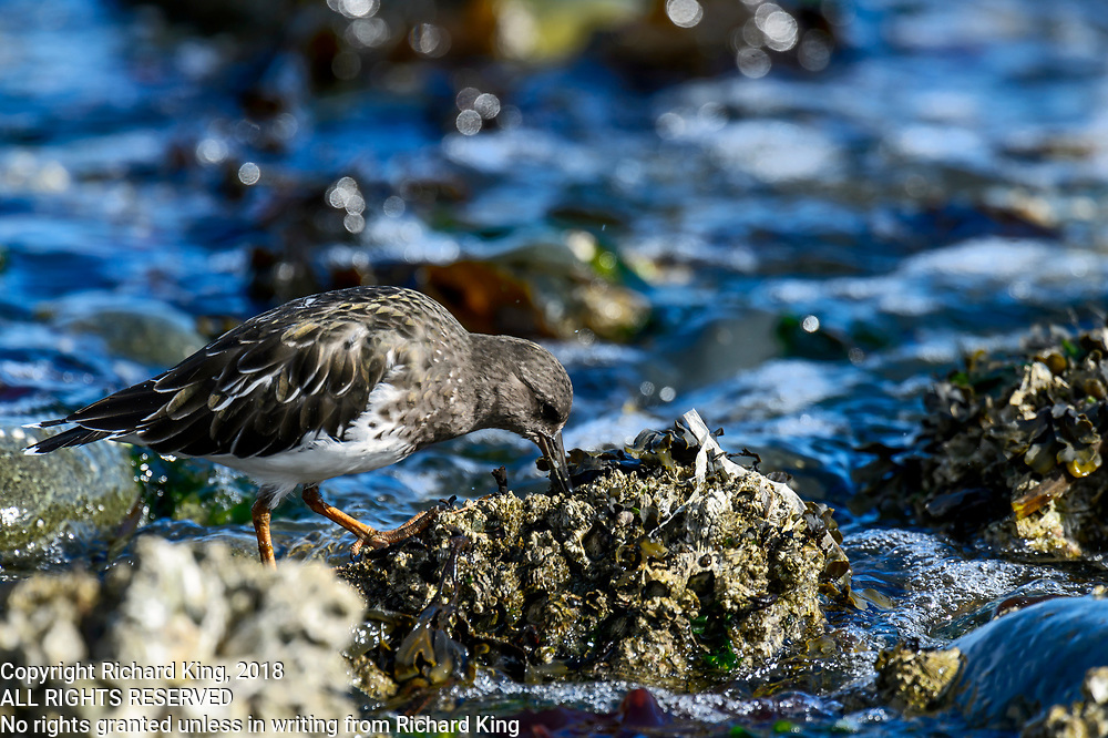 Wildlife photography from Cluxewe Beach, British Columbia, Canada