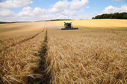 © Licensed to London News Pictures. 07/08/2014. Malshanger, Hampshire, UK. Barley Harvest at Summerdown Farm near Malshanger in Hampshire. The farmers are making the most of the good weather today, 7th August 2014, to harvest the crops before the predicted unsettled period this weekend. Photo credit : Rob Arnold/LNP