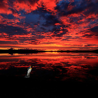 Fire in the sky with a king penguin, Volunteer Point, Falkland Islands, 2017