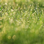 &quot;Blades of Light&quot; <br /> <br /> You'll love the upbeat and refreshing feeling of this beautiful nature abstract! <br /> Fresh green grass and morning dew bathed in sunlight!
