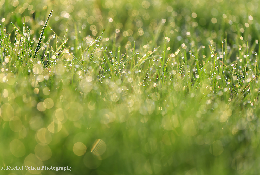 &quot;Blades of Light&quot; <br />