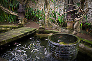 Fish pond at Tugu Hotel Bali.