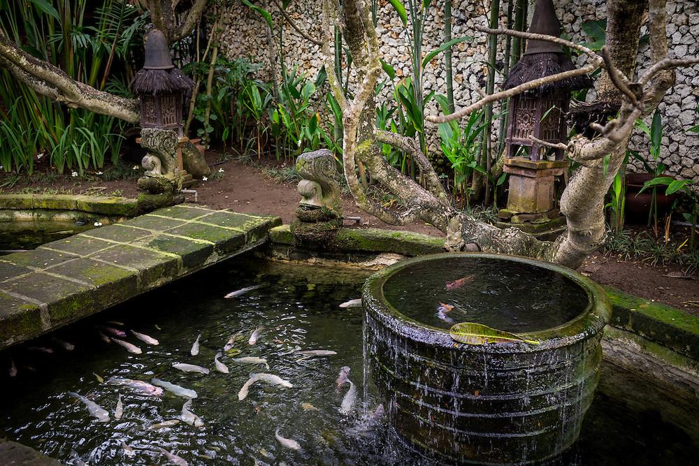 Fish pond at Tugu Hotel Bali.