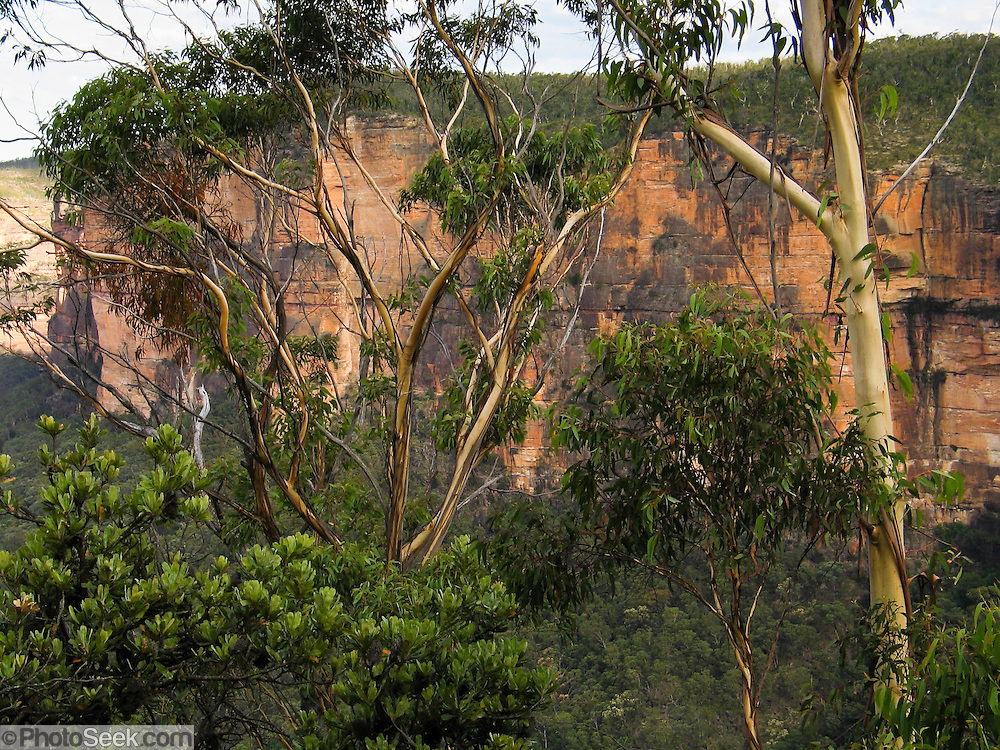 Blue Mountains National Park is a deeply incised sandstone plateau (with basalt outcrops on the higher ridges) in the Great Dividing Range, 81 km west of Sydney, New South Wales, Australia. The highest point in the park is Mount Werong (1215 m), and the low point is on the Nepean River (20 m) as it leaves the park. The plateau provided refuge from climatic changes during recent geologic history and enabled survival of a rich diversity of plant and animal life. The Greater Blue Mountains Area was honored as a UNESCO World Heritage Site in 2000.