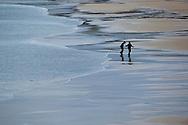 Person walking on wide expanse of beach, Luskentyre, North Harris. Scotland.