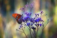 Stock Butterflies and Moths