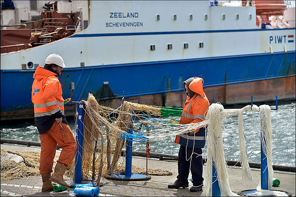 Nederland, the Netherlands, Scheveningen, 19-5-2015On the quay in the harbor of this fishingvillage, personel of a large industrial fishing boat, are expiating, mending,  nets. The fishermen do maintenance, repair and replacement of bad stretches net. The ship is the Zeeland, a trawler.Aan de kade in de haven, vissershaven, van deze vissersplaats staat personeel van een groot, industrieel vissersschip, netten te boeten. Zij doen onderhoud, reparatie en vervanging van slechte stukken net. Het schip is de Zeeland, de SCH 123, PIWT. Vriestrawler.FOTO: FLIP FRANSSEN/ HOLLANDSE HOOGTE