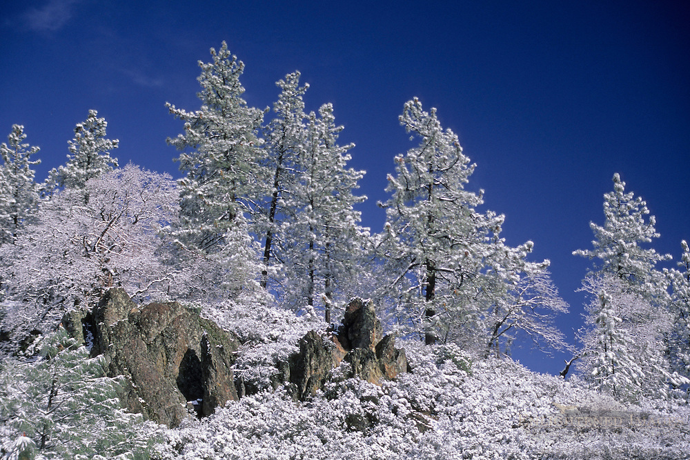 Snow-covered trees on Mount Hamilton, Santa Clara County, California