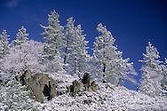 Snow-covered trees on Mount Hamilton, Santa Clara County, California